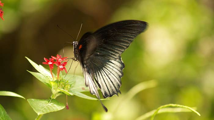 best places to visit in florida - Butterfly World