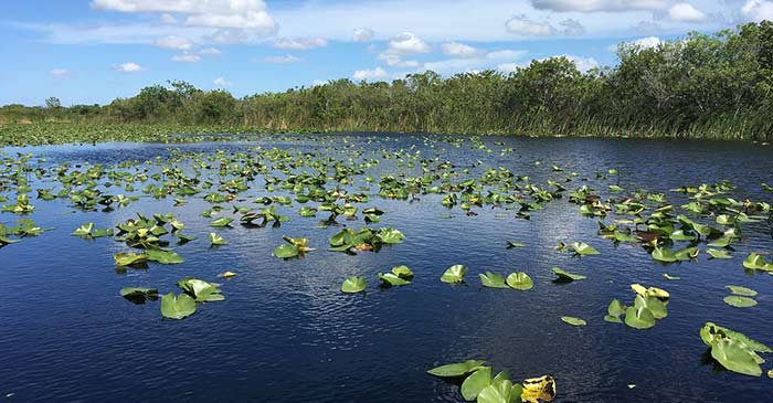 Everglades in Florida places to visit