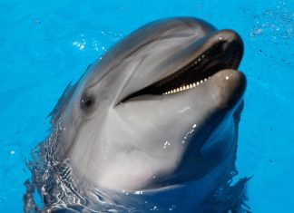 Dolphin tours in virginia