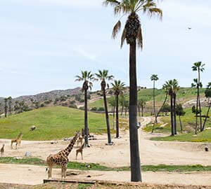 San Diego Attraction: San Diego Zoo
