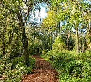 Siesta Beach Attraction: The Nature Trail