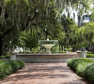 Savannah Attraction: Squares