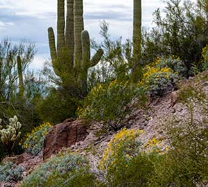 Boulder Attraction: Saguaro National Park