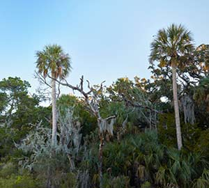 Jacksonville Attraction: Big Talbot Island State Park