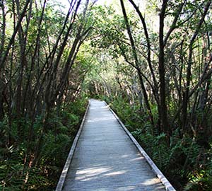 Cape Coral Attraction: Mangrove Forest