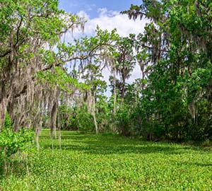 New Orleans Attraction: Jean Lafitte National Historical Park and Preserve
