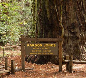 Sonoma Attraction: Armstrong Redwoods State Natural Reserve