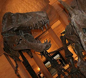 Los Angeles Attraction: Natural History Museum
