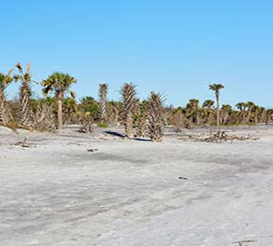 Jacksonville Attraction: Little Talbot Island
