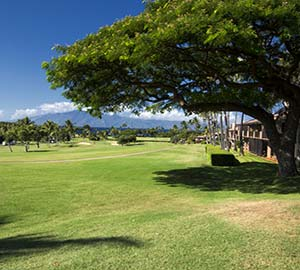 kaanapali beach Attraction: West Maui Golf Resorts