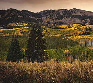 Park City Attraction: Guardsman Pass Scenic Backway