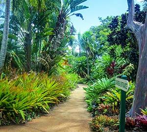 Hawaii - The Big Island Attraction: Hawaii Tropical Botanical Garden