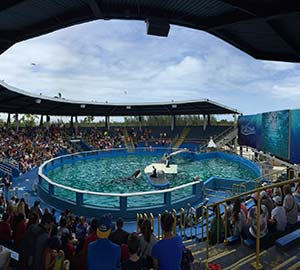 Miami Attraction: Seaquarium